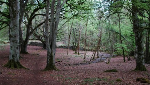 Portumna Forest Park – Woodland Walking Trail