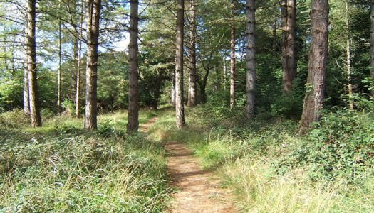 Portumna Forest Park – Rinmaher Walking Trail
