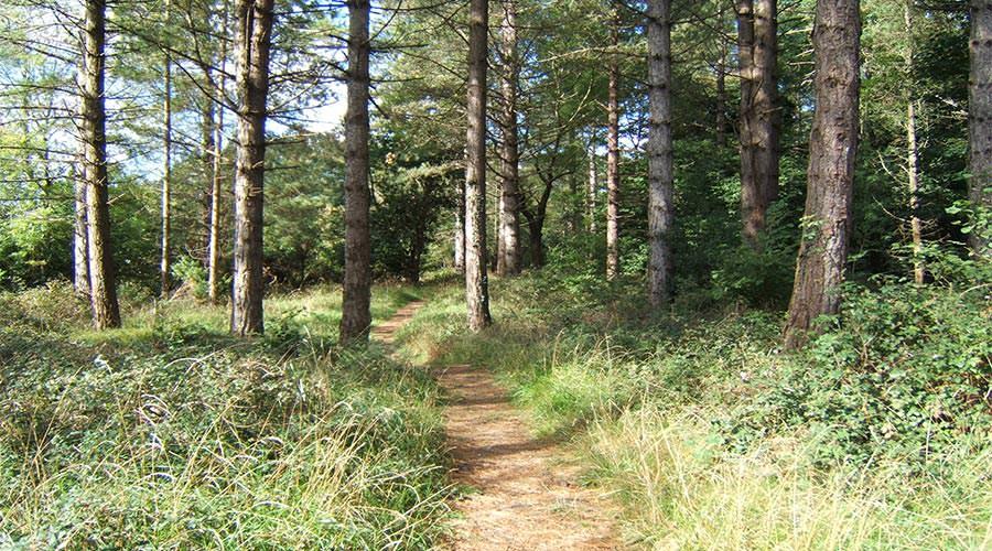 Portumna-Forest-Park Marathon