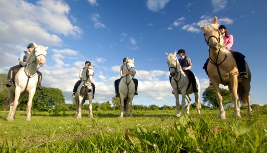 Clonlara Equestrian Centre